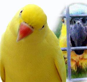 Ajan papağanlar gözaltına alındı | Yaşam haberleri