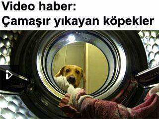 Video haber: Çamaşır yıkayan köpekler