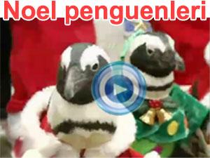 Noel Baba olan penguenler - video | BBC Ortak yayın