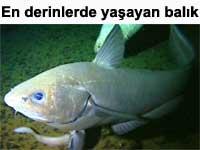 En derin sularda yaşayan balık | BBC video haber